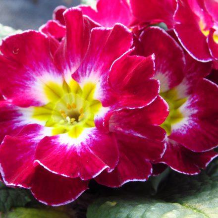 Ghiveci cu flori cadou