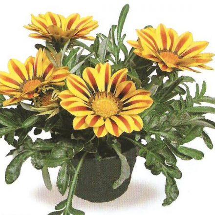 flori de sarbatori